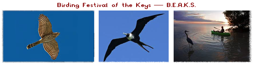 Birding Festival of the Keys